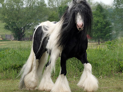 These 25 Rare And Beautiful Horses Are Like Nothing You Have Ever Seen